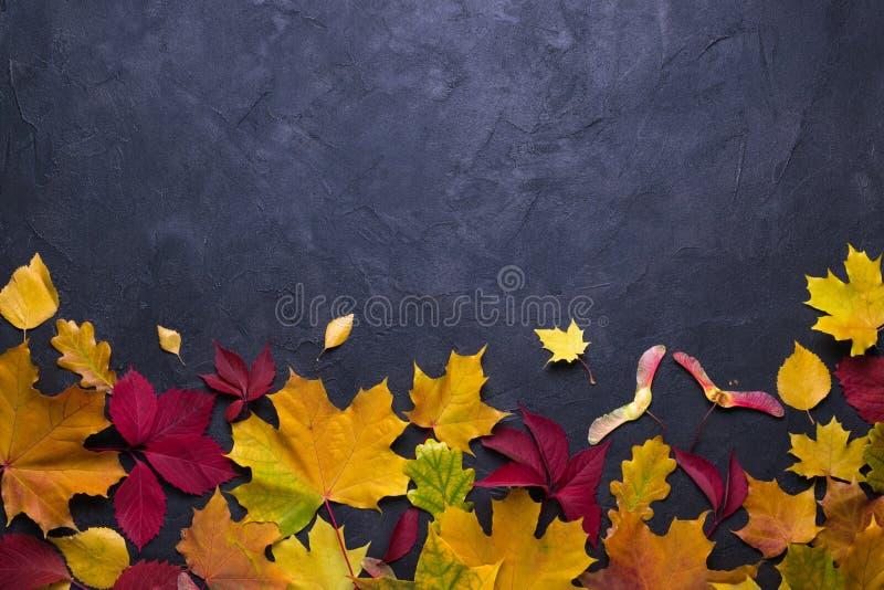Vue avec des lames d'érable d'automne Calibre de chute de nature pour la conception, menu, carte postale, bannière, billet, tract images libres de droits