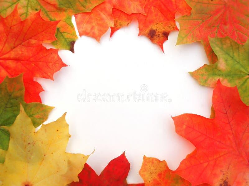 Vue avec les lames colorées d'érable d'automne image stock