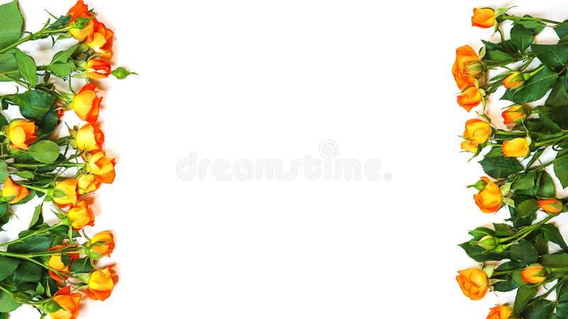 Vue avec les roses roses vivantes de couleur de corail sur le fond blanc Ressort de attente Configuration plate, vue supérieure C photo stock