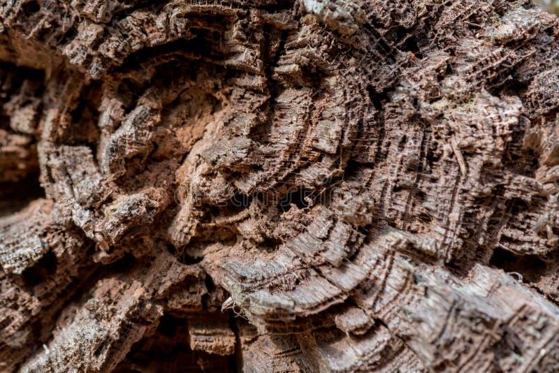 Vue cassée de fin d'arbre photographie stock libre de droits