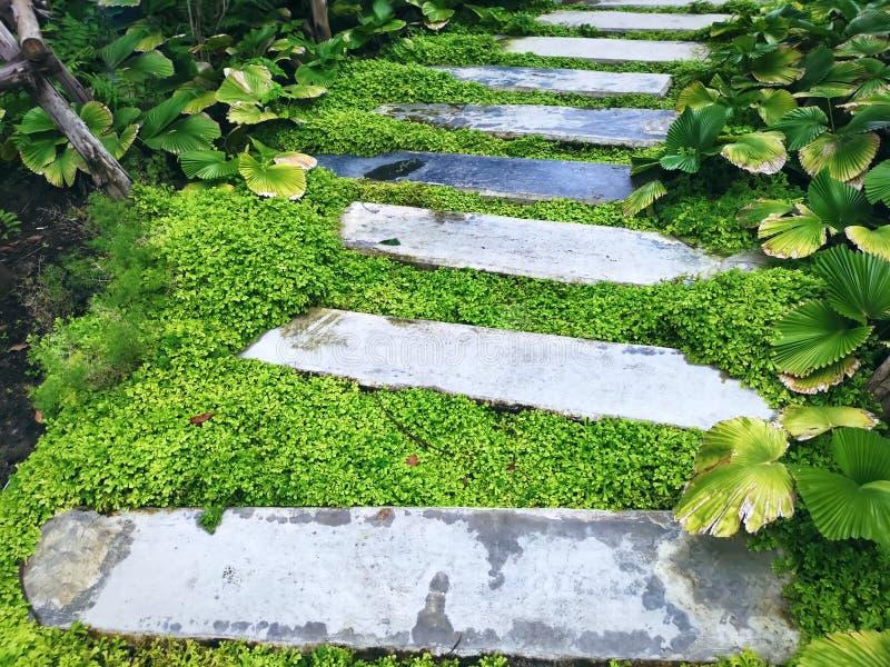 Vue courbe de passage couvert de blocs de béton par de petits arbustes dans le jardin photo stock