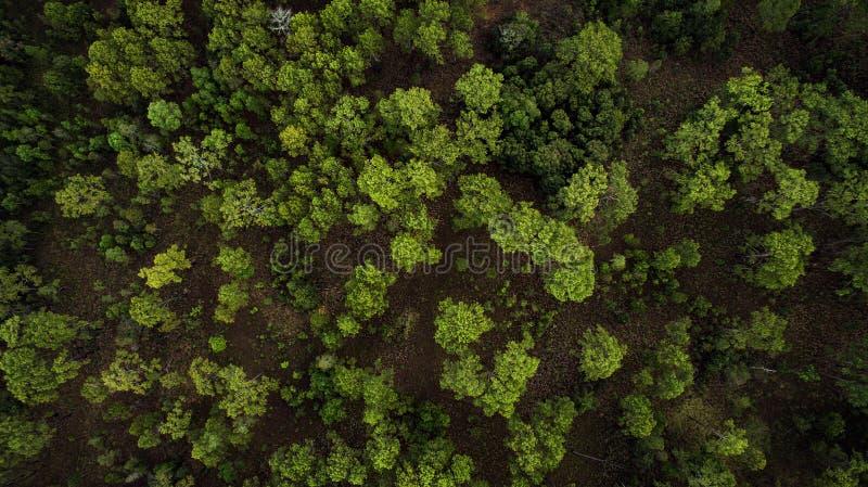 Vue courbe par la photographie de bourdon au-dessus de la forêt à feuilles caduques mélangée images libres de droits