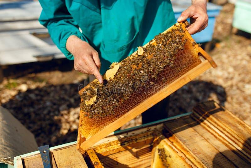Vue cultivée d'un apiculteur regardant un nid d'abeilles, sur le fond de ruches Tir ext?rieur horizontal photos stock