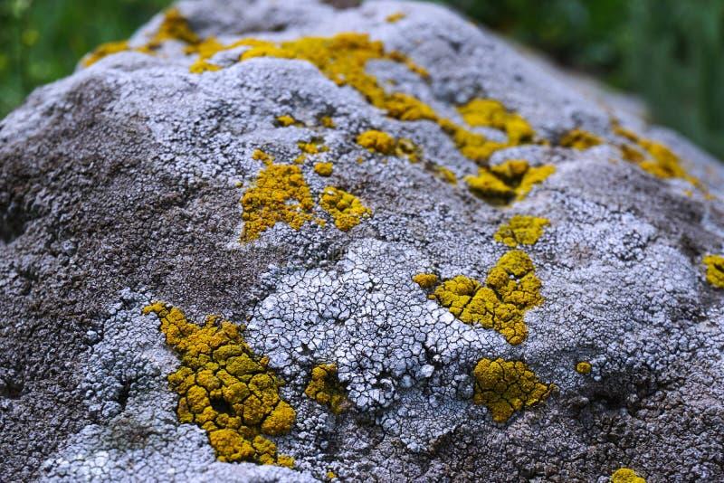Vue détaillée de la pierre superficielle par les agents couverte de lichens jaunes et blancs images stock
