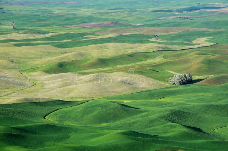 Vue d'été de configuration de terres cultivables image stock
