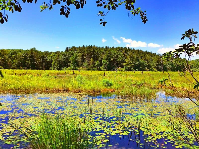Vue d'été de parc d'état de Burr Pond images stock