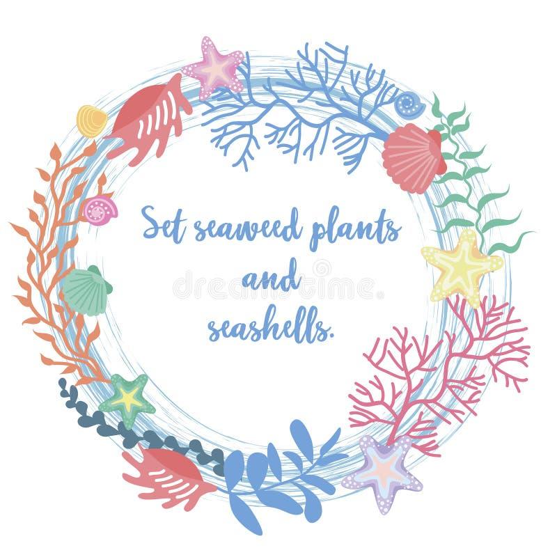 Vue d'algue, de corail et de coquilles illustration stock