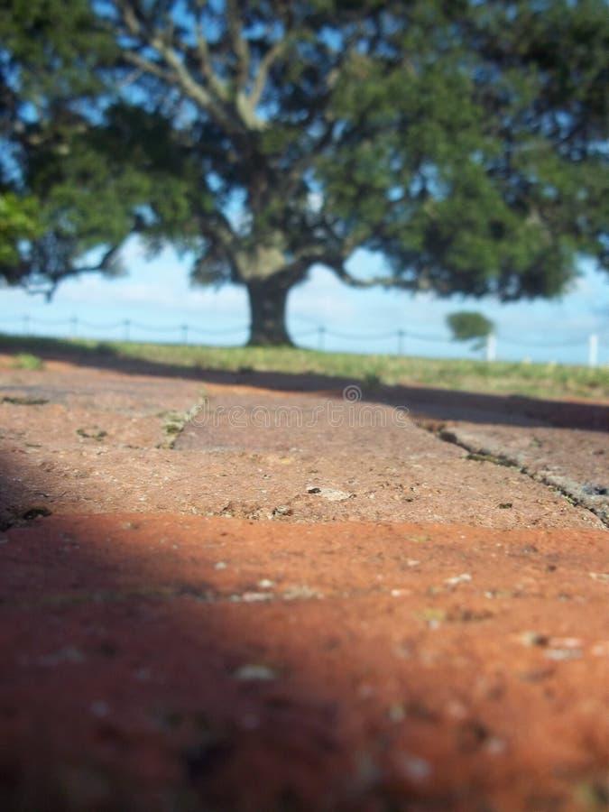 Vue d'angle faible d'arbre images libres de droits