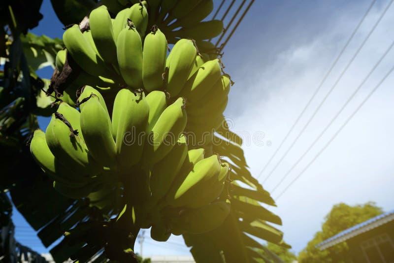 Vue d'angle faible de bananier avec la fuite légère photographie stock
