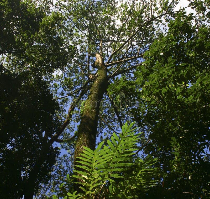 Vue d'angle faible des arbres photos stock