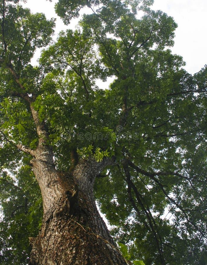 Vue d'angle faible des arbres photo stock