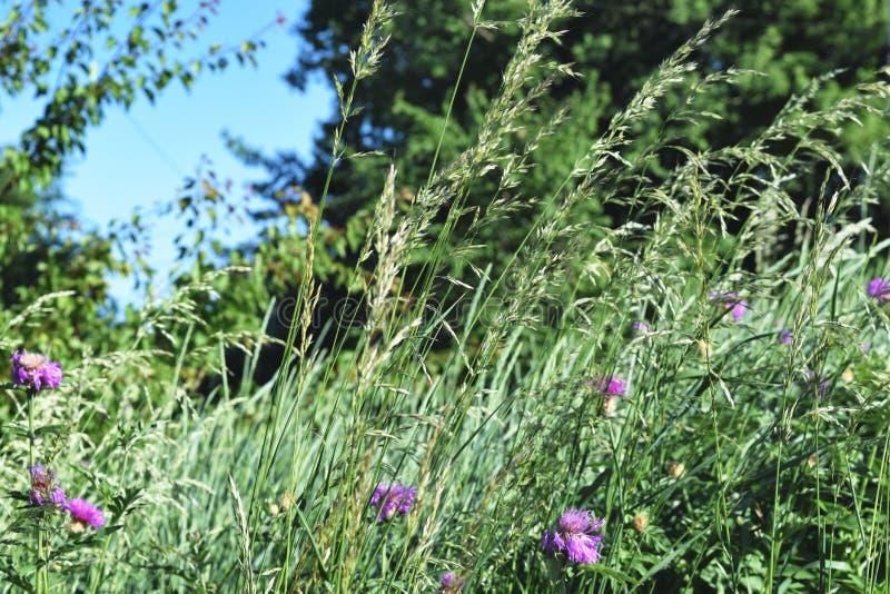Vue d'angle faible d'herbe fraîche images libres de droits