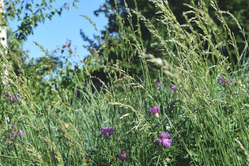 Vue d'angle faible d'herbe fraîche image stock