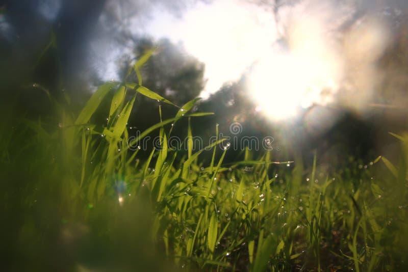 Vue d'angle faible d'herbe fraîche concept de liberté et de renouvellement images libres de droits