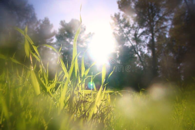 Vue d'angle faible d'herbe fraîche contre le ciel bleu avec des nuages concept de liberté et de renouvellement photo libre de droits