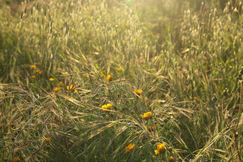 Vue d'angle faible d'herbe fraîche contre le ciel bleu avec des nuages concept de liberté et de renouvellement images libres de droits