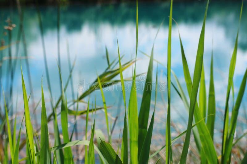 Vue d'angle faible d'herbe fra?che concept de libert? et de renouvellement image stock