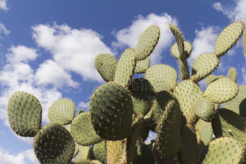 Vue d'angle faible sur une partie de cactus images stock