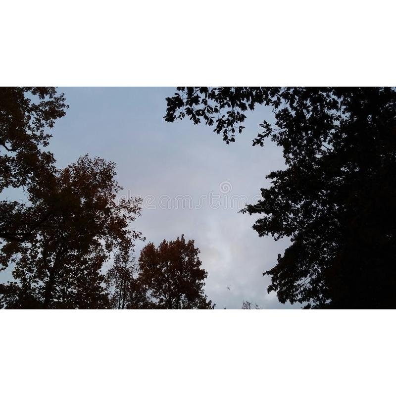 Vue d'arbre photos stock