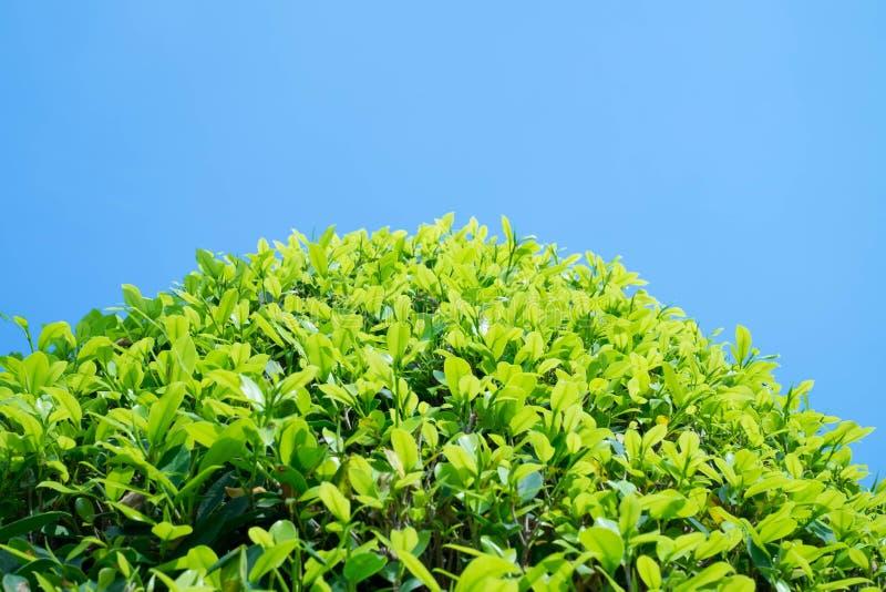 Vue d'arbre et de ciel bleu photo stock