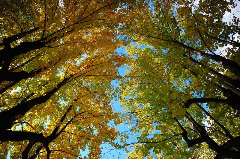 Vue d'arbres ascendante photographie stock