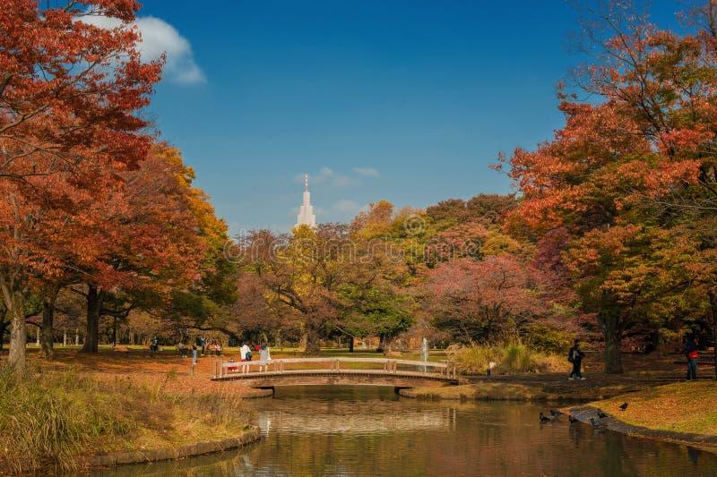 Vue d'automne de parc de Yoyogi images libres de droits