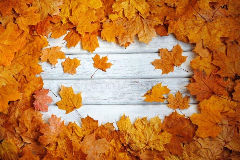 Vue d'automne, feuilles jaunes sur une surface blanche images stock