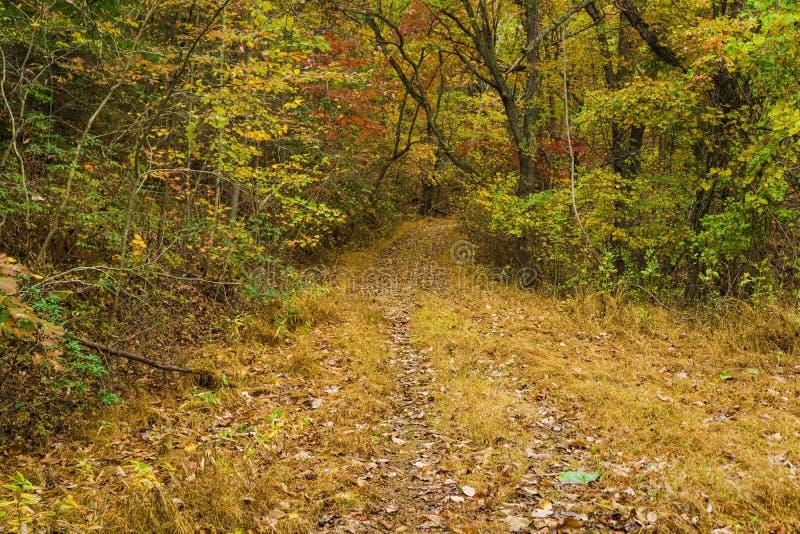 Vue d'automne d'un sentier forestier paisible image stock