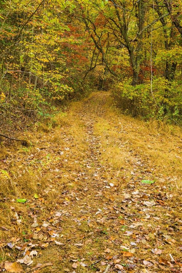 Vue d'automne d'un sentier paisible dans les bois image libre de droits