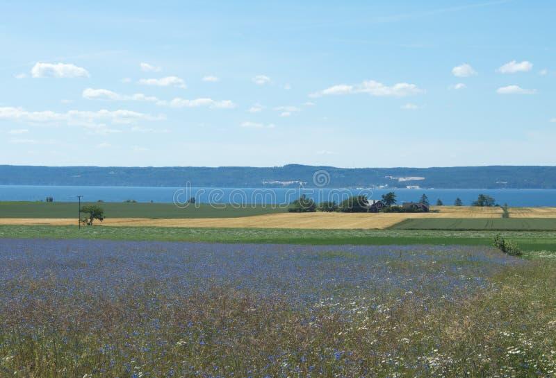 Vue d'ensemble de l'île suédoise Visings photographie stock libre de droits