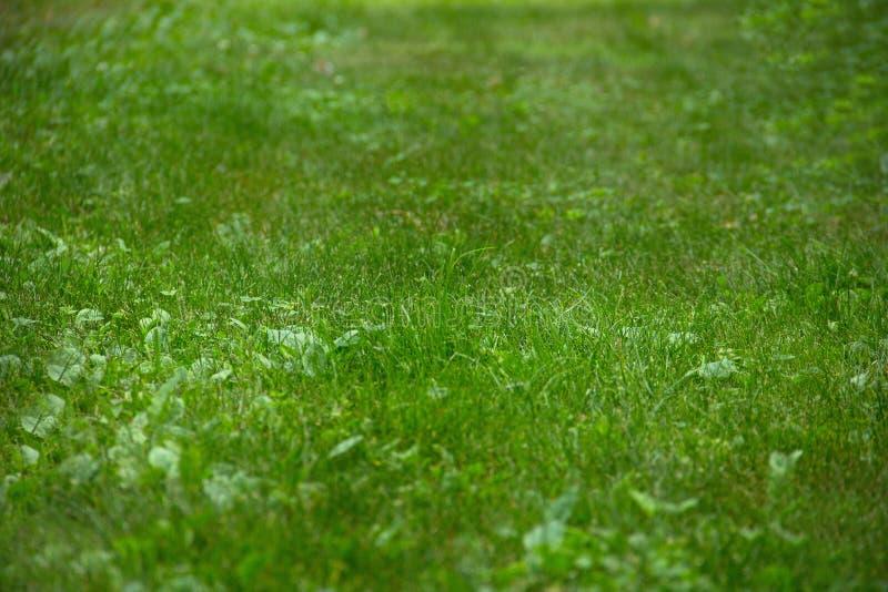 Vue d'herbe avec la profondeur du champ photo stock