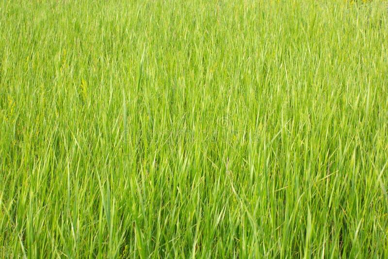 Vue d'herbe avec la profondeur du champ photographie stock libre de droits
