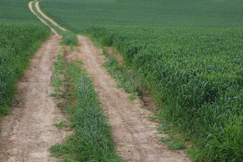 vue d'herbe et de route fraîches dans le domaine concept de liberté et de renouvellement photographie stock libre de droits