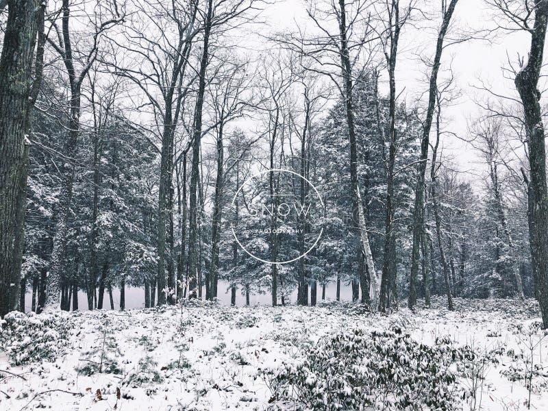 Vue d'hiver en bois de parc d'état d'étang de bavures photos libres de droits