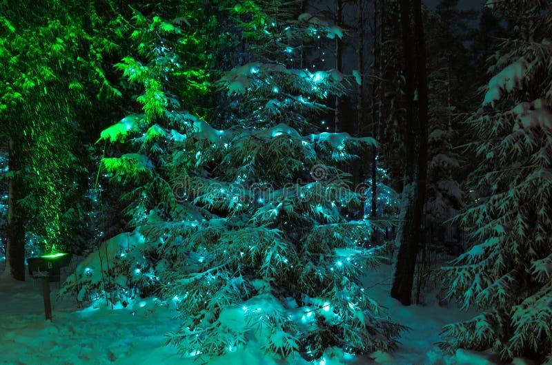 Vue d'hiver : sur son trente et un dans la forêt de nuit décorée de la guirlande de Noël photographie stock