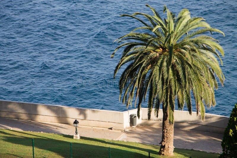 Vue d'océanographe Monte Carlo et d'une grande paume photo libre de droits