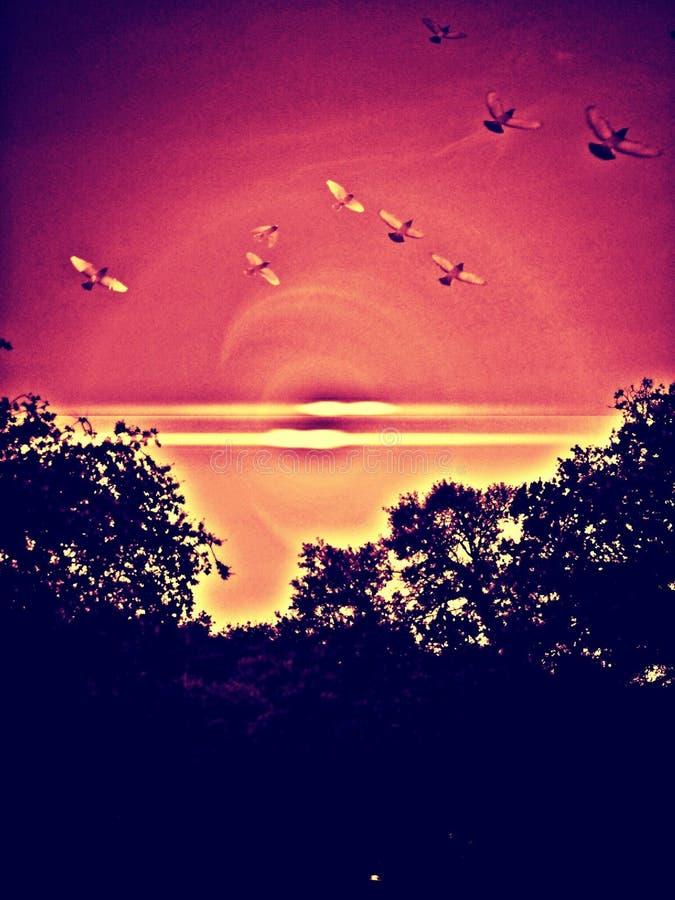 Vue d'oeil d'oiseaux photo libre de droits