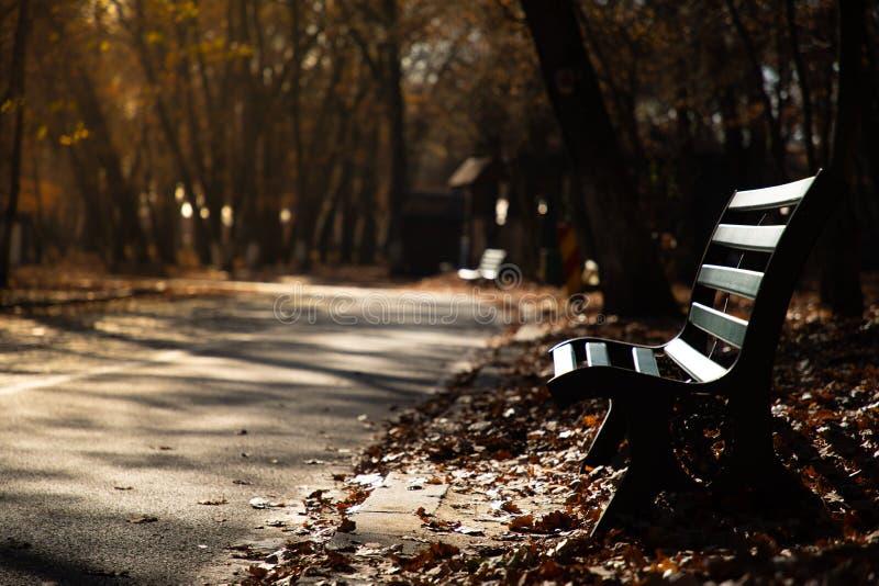 Vue d'un banc en automne avec la lumière de coucher du soleil image stock