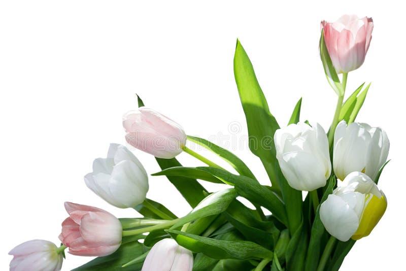 Vue d'un bouquet des tulipes sur un fond blanc photographie stock
