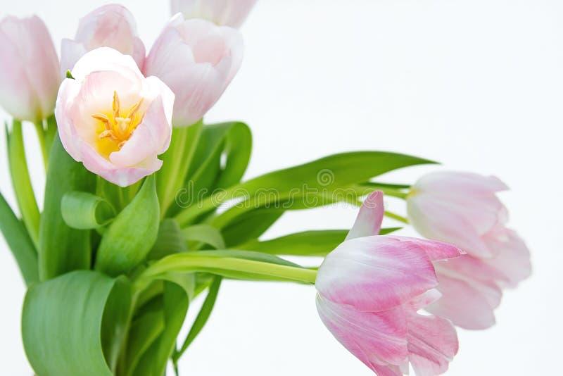 Vue d'un bouquet des tulipes sur un fond blanc images libres de droits
