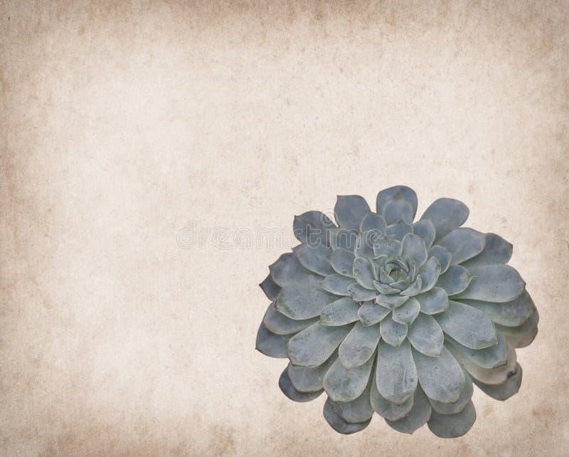Vue d'un cactus sur le papier photographie stock libre de droits