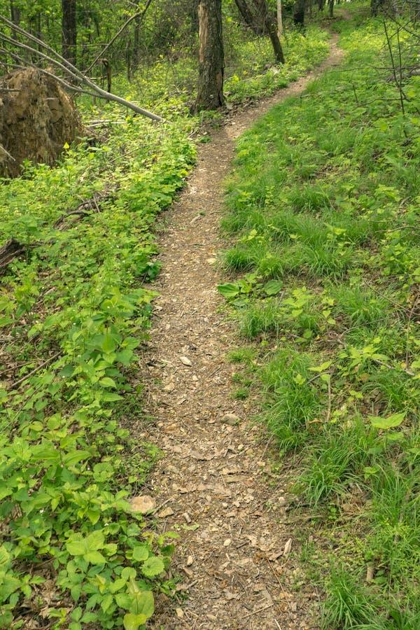 Vue d'un sentier de randonnée de région boisée dans les montagnes - 2 photographie stock libre de droits