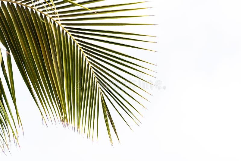 Vue d'une branche de paume sur un fond blanc, Bayahibe, La Altagracia, République Dominicaine  Copiez l'espace pour le texte images stock