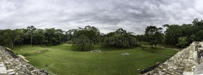 Vue d'une jungle verte derrière un champ d'herbe photographie stock libre de droits