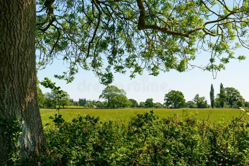 Vue dans la campagne anglaise photo libre de droits