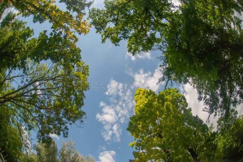 Vue dans le ciel avec des arbres ci-dessus images stock