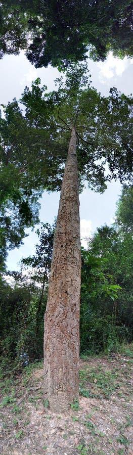 Vue de bas en haut d'arbre photo libre de droits