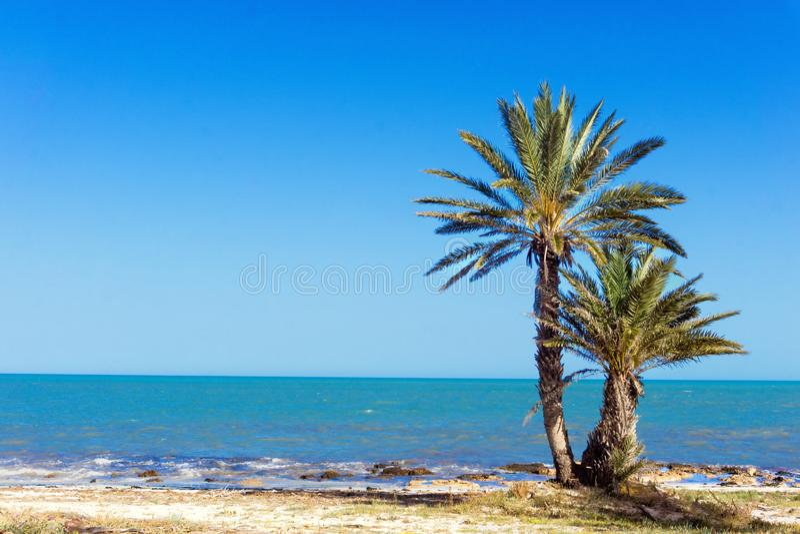 Vue de belle plage dans Djerba, Tunisie photo libre de droits
