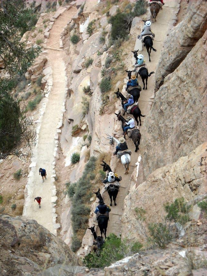 Vue de Birdseye d'une traînée de Grand Canyon image libre de droits