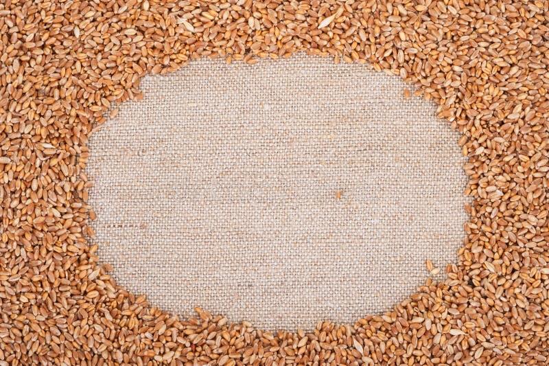 Vue de blé sur renvoyer photo stock